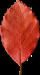 bee_autumncomes_el31.png