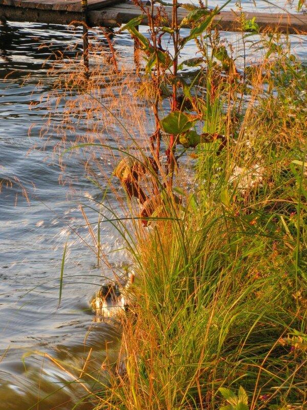 Пяловское водохранилище, Травы
