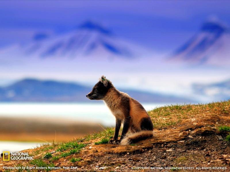 Лучшие фотографии природы от National Geographic 2009