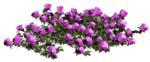 цветы (106).png