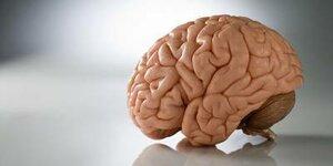 К вечеру объем мозга человека уменьшается