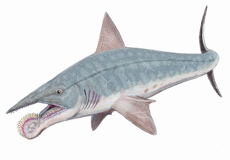 Зачем акуле циркулярная пила вместо зубов?