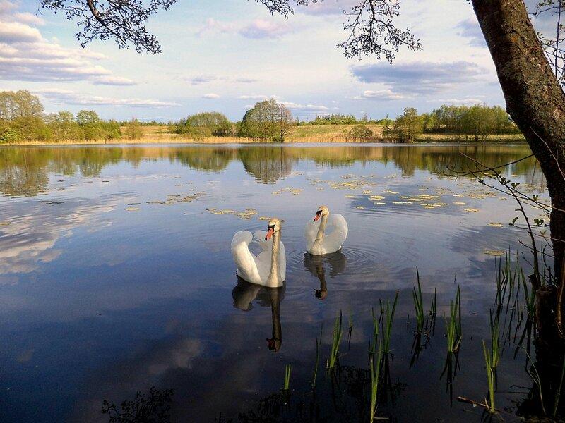 Озеро двух  лебедей...
