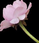 bee_floral_el6.png