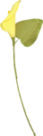 NLD Candilicious Flower (2).png