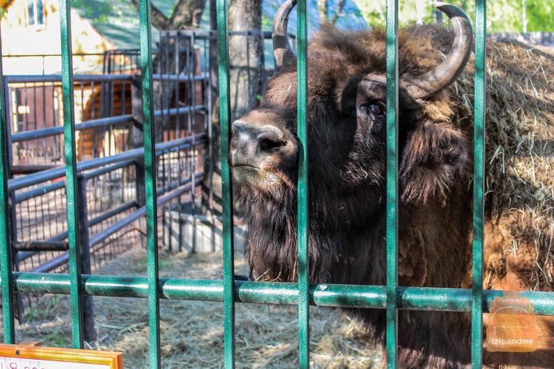 Як в зоопарке Лимпопо