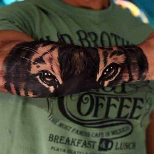 тату татуировка тигр глаза рука