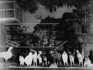 """Сцена из спектакля """"Шантеклер"""" по пьесе Э. Ростана."""