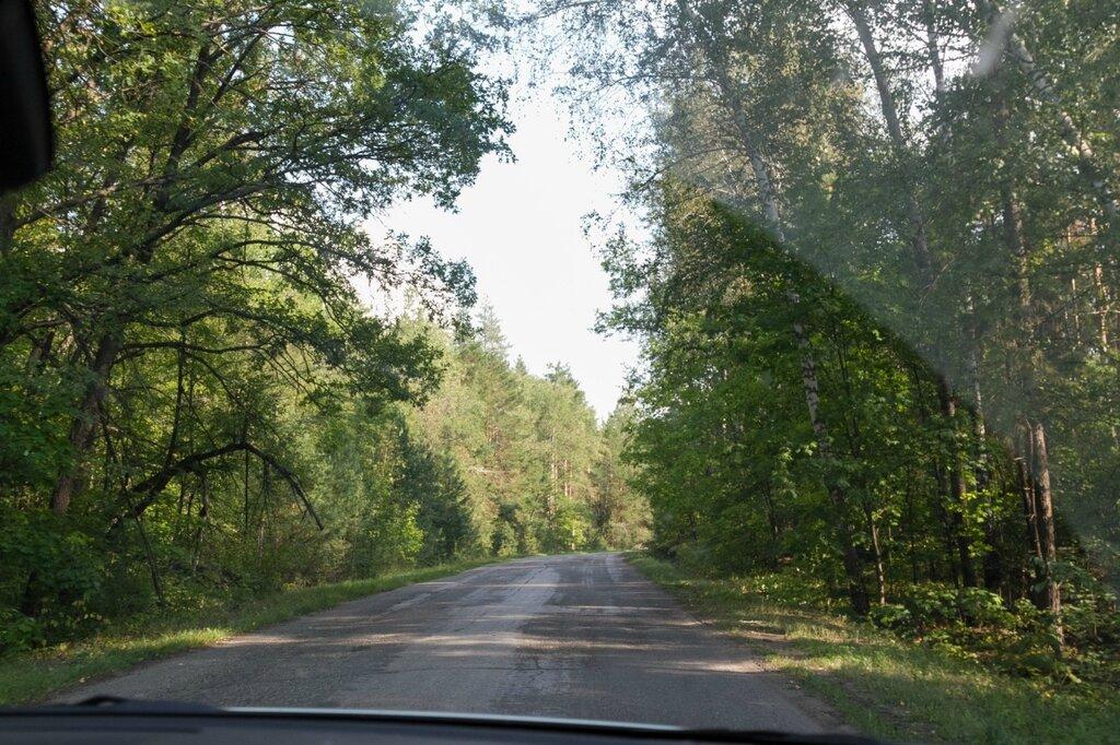Лес в Ульяновской области