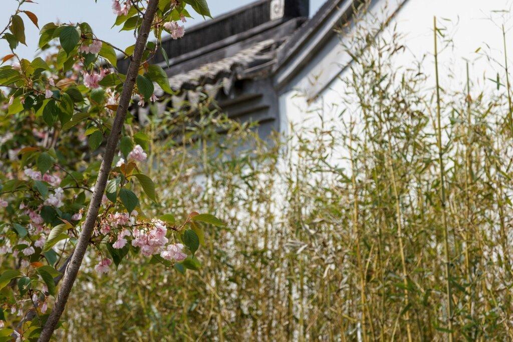 Сакура, парк-выставка садов, Пекин