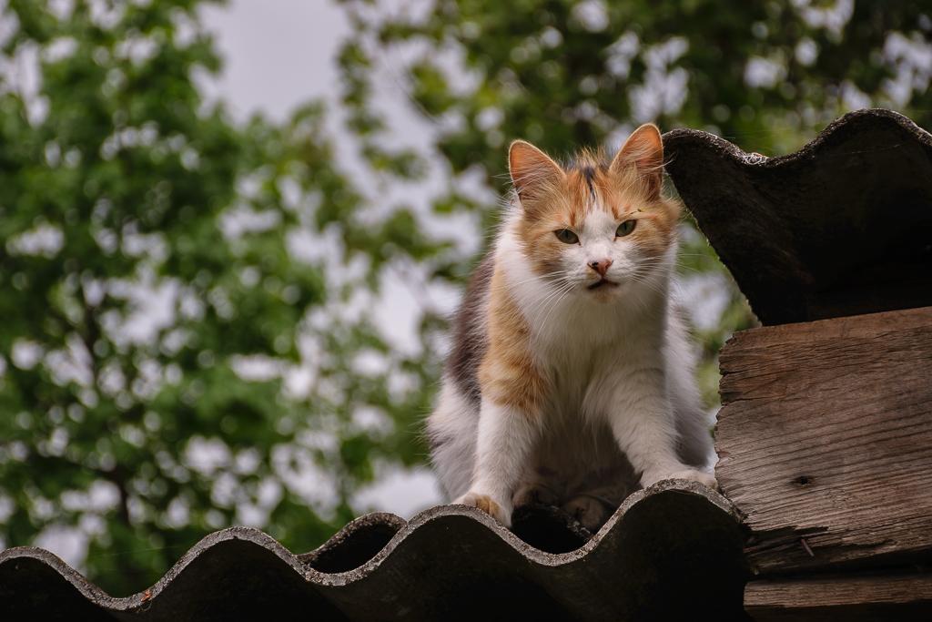 Фотография 15. Кошкам нравится сниматься на Nikon D5300 KIT 18-140 VR (1/320s, Ф=5,3, 85 мм)