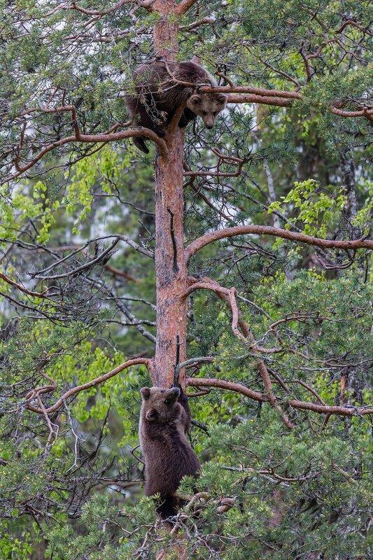 дешевые термосы во фрязино медведь на дереве продаже частных