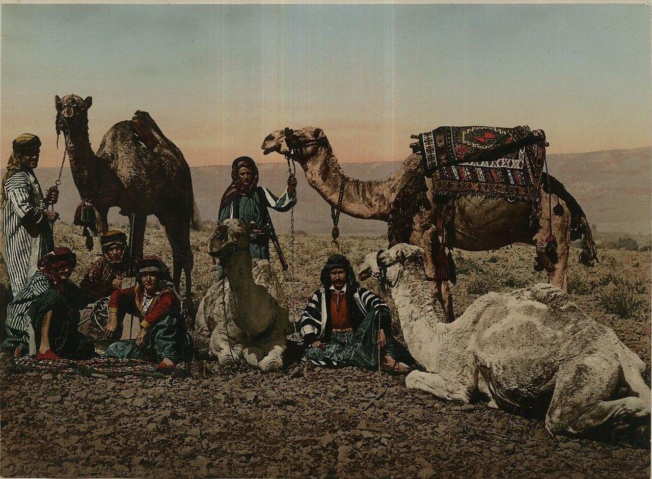 Бедуины в пустыне