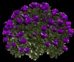 цветы (103).png