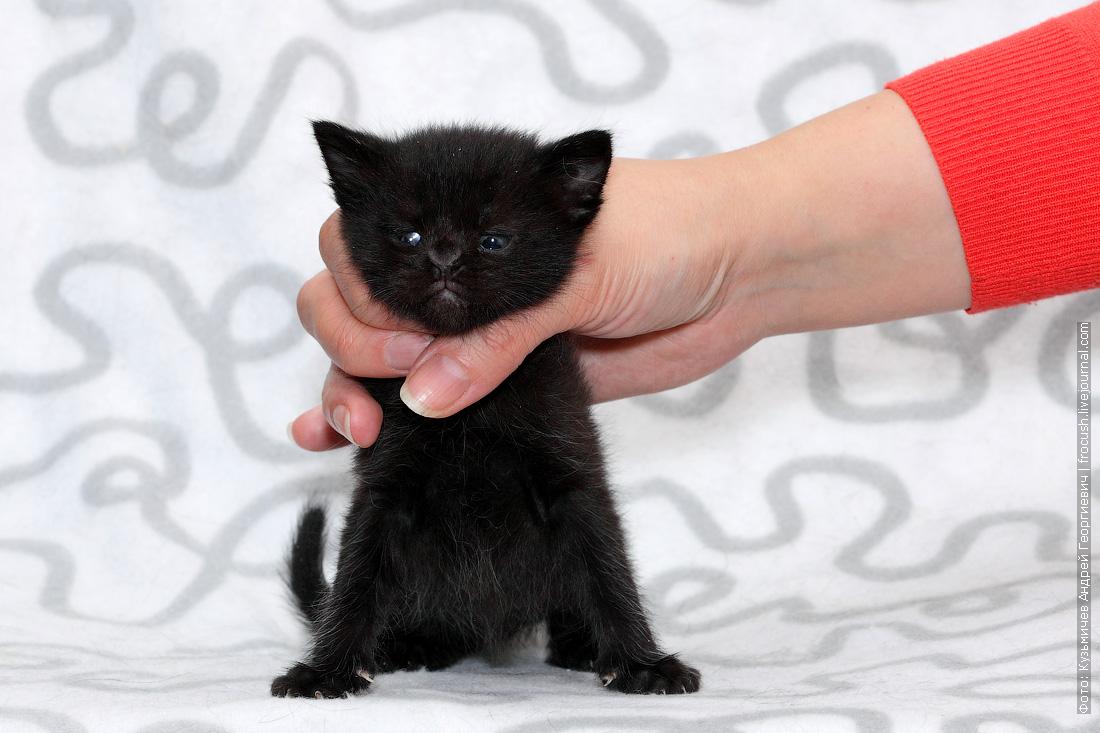 фотография пантеретта котенок