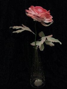 Роза - царица цветов 3 - Страница 2 0_1068a1_de55307d_M