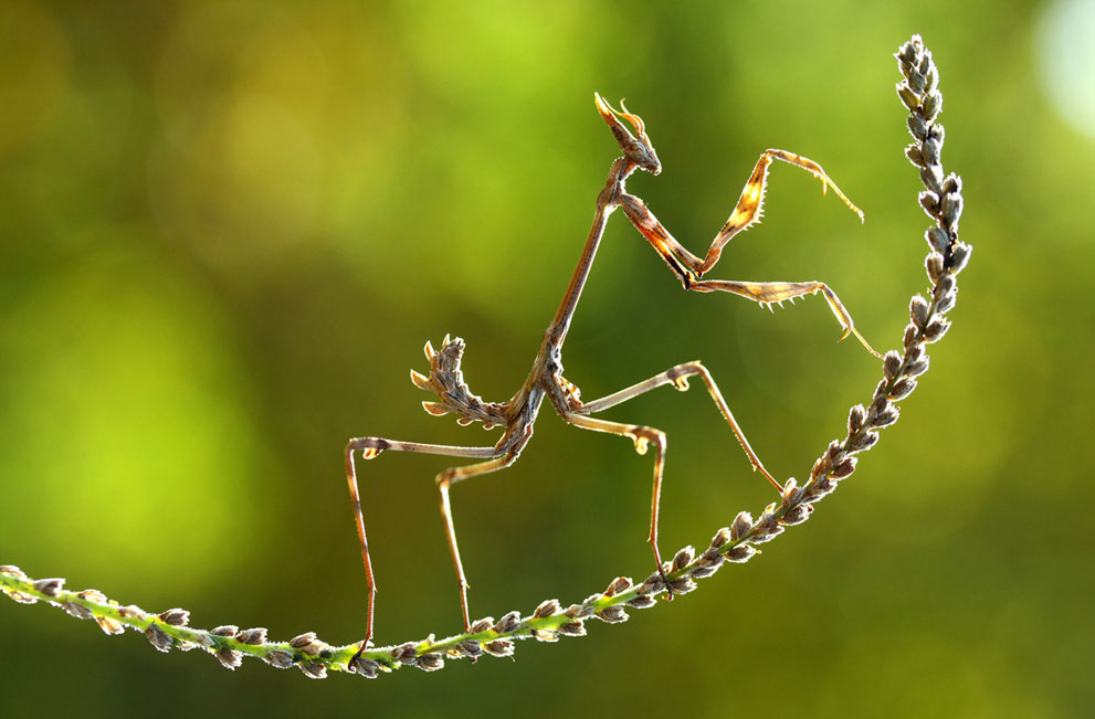 More, 2014 NatGeo Photo Contest_1280.jpg