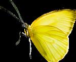 Lemony-freshness_elmt (24).png