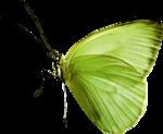 Lemony-freshness_elmt (24)b.png