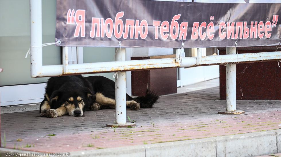 Бездомные животные, Тверь