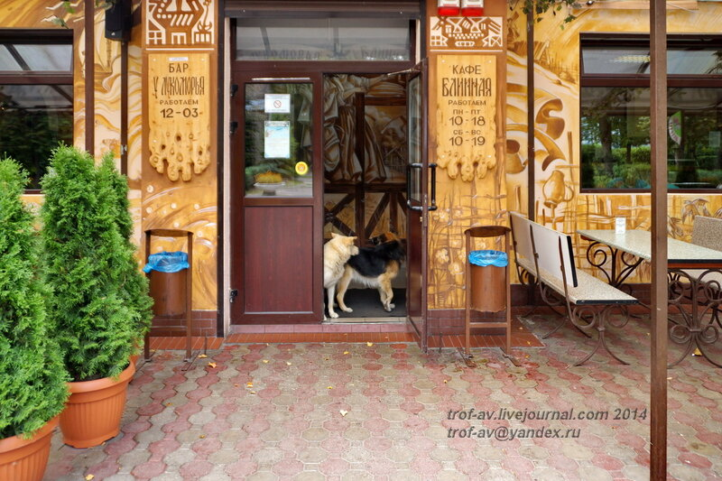 Собаки - в баре гуляки. Светлогорск-Rauschen