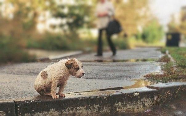 щенок бездомный