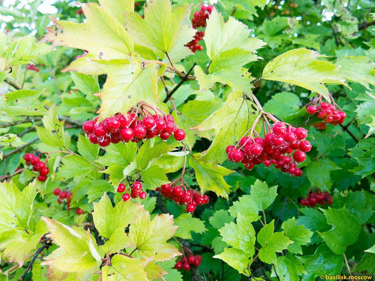 Цветы, ягоды и фрукты на даче в ближнем Подмосковье.