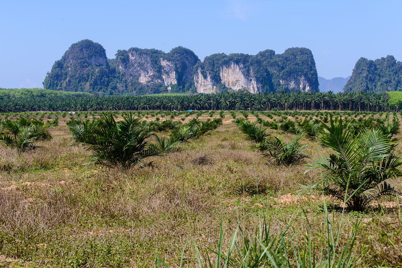 Фотография 19. Прощай чудесная страна Краби! Мы продолжаем своем самостоятельное путешествие по Таиланду за рулем арендованного автомобиля (250, 75, 9.0, 1/400)