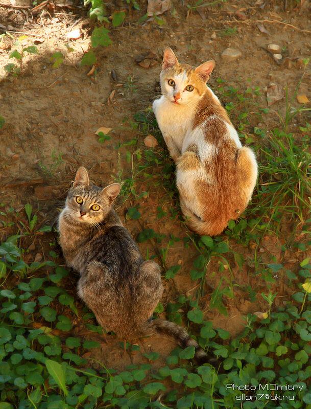 Коты & кошки (2013)