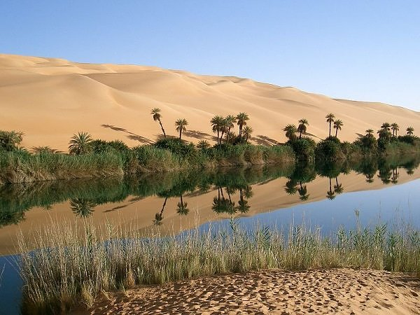 Удивительные острова жизни пустынь