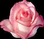Vintage_Roses_Lilas_el (43).png