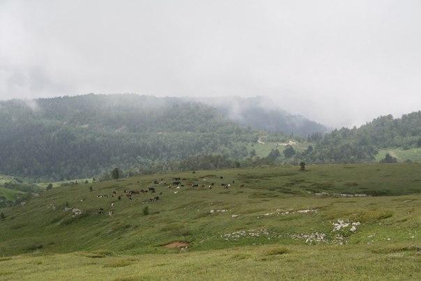 Отдых в горах - Плато Лагонаки