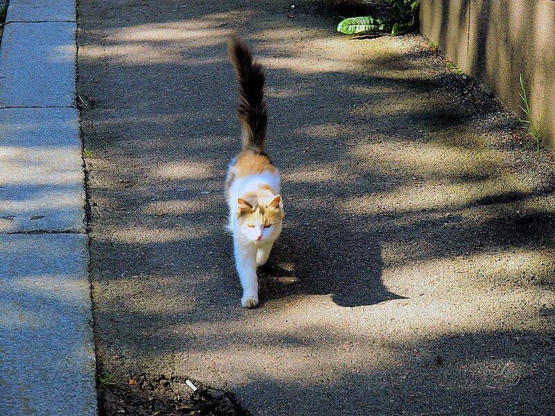 Идет по улице