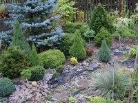 Книга Хвойные растения в саду