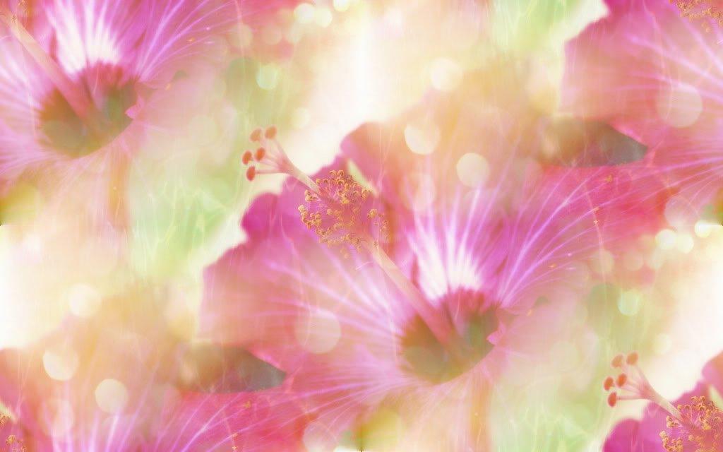 Hibiskus_Glamor_Flowers.jpg