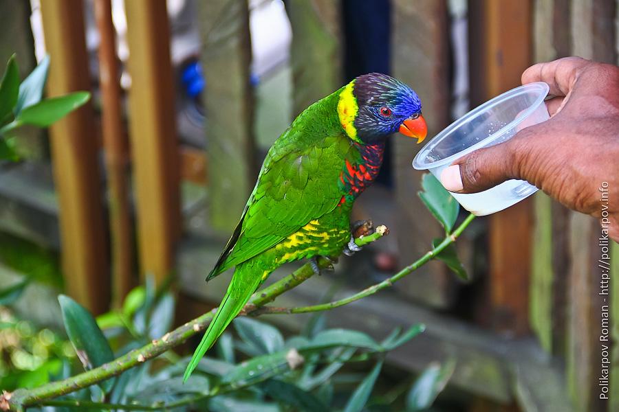 0 c4fd6 ccf3972c orig Парк птиц Jurong в Сингапуре