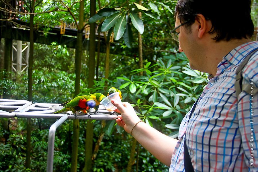0 c4fda 47d13604 orig Парк птиц Jurong в Сингапуре
