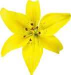 ldw_UnderPalmTree_flower-yellow3.png