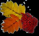 осень (13).png