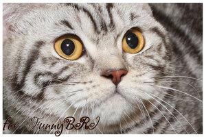 Лаптева-фото - Фотографии животных для питомников и заводчиков - Страница 4 0_12a250_8c24e7a5_M