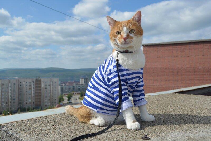 коты десантники картинки отдыха лукоморье
