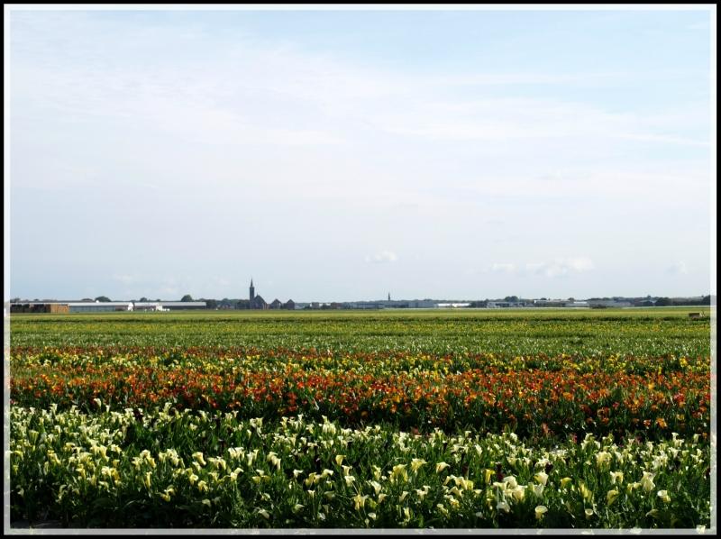 holland2 012.jpg