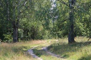 Окрестности села Рябчи.