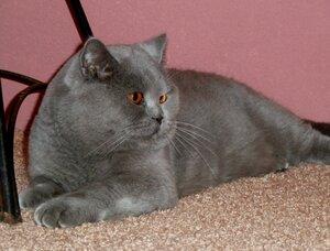 Каталог вяжущих котов 0_f32de_4a751076_M