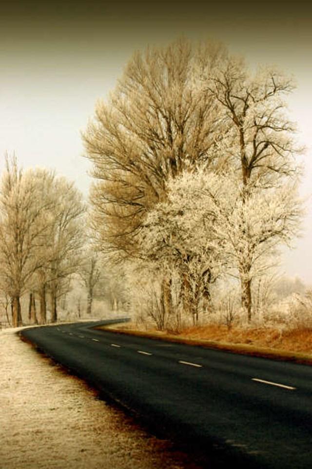 100 самых красивых зимних фотографии: пейзажи, звери и вообще 0 10f5a4 870ddbfe orig