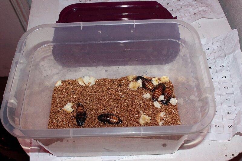 Милые тараканчики в коробке, где спрятаны ответы - Логово ББ - Побег из комнаты в Кирове