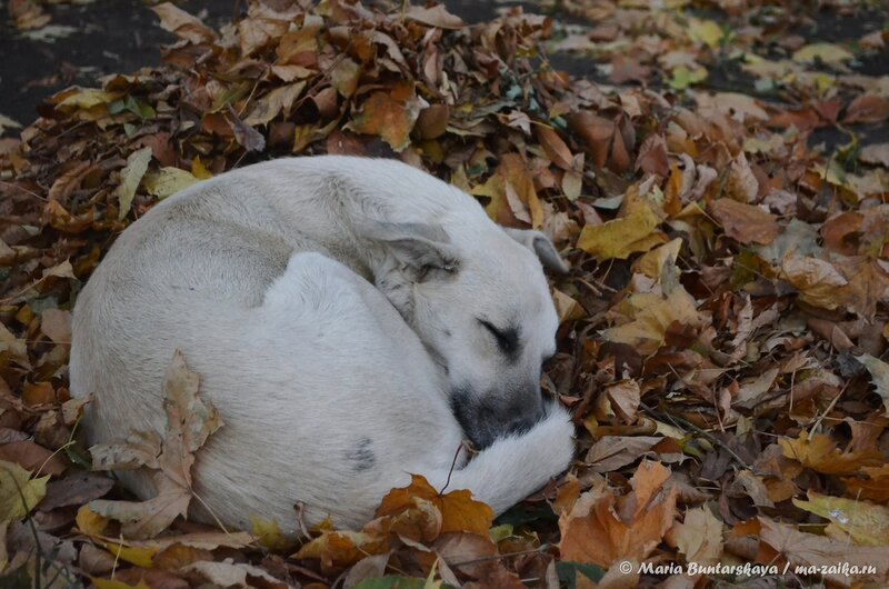 Пёсик, Саратов, сад 'Липки', 23 октября 2014 года