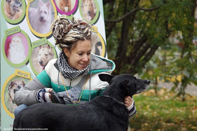 Осень. Фестивальный парк. Собаки. 04.10.14.01...jpg