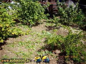 подрезанный сорняк