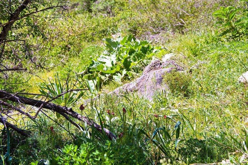 Природа Кызылаты